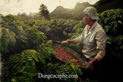 Brazil với các trang trại rộng khắp chiếm 1 phần 3 lượng cà phê trên thế giới