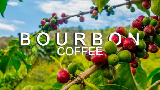 Cà phê Bourbon ( cà phê Moka) là gì?