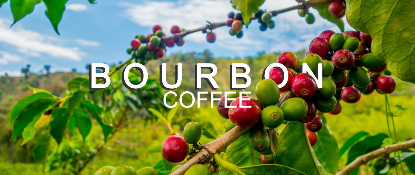 Cà phê bourbon là gì?
