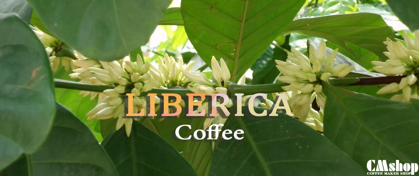Cà phê Mít, cà phê Liberica, Excelsa