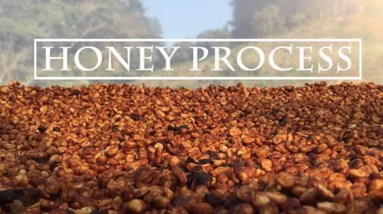 Phương pháp chế biến cà phê bán ướt (chế biến mật ong) là gì?