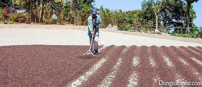 Chế biến cà phê khô là phương pháp lâu đời nhất