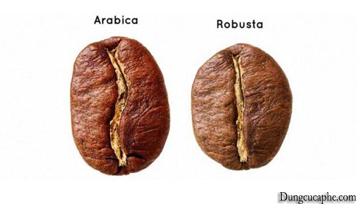 Hạt cà phê Robusta và hạt cà phê Arabica
