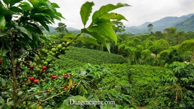 Một nông trại nhỏ ở Costa Rica