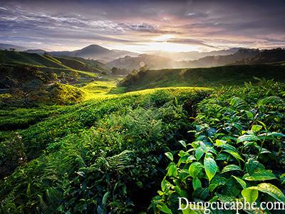 Một vùng cao nguyên trồng cà phê phía Đông Papua New Guinea